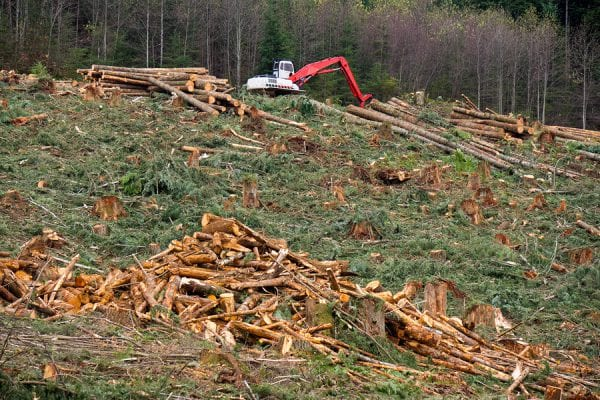 Clearcut Logging In Pacific Northwest. A debris pile is in the foreground and a log loader in the background.